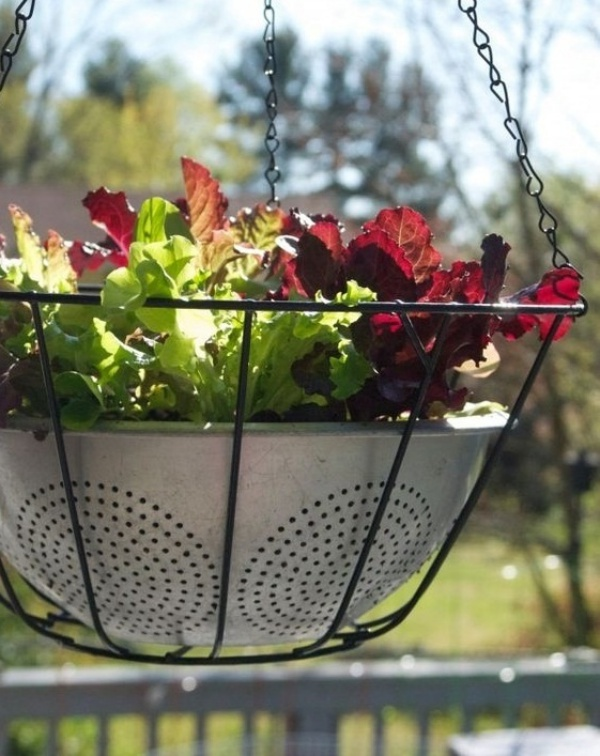 6 loại rau củ quả bạn có thể trồng trong giỏ mà vẫn sai quả, tươi tốt - Ảnh 6.