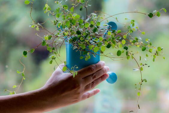 Những nông dân thành phố sẽ thích mê chậu cây treo Livi vừa xinh xắn vừa tiết kiệm diện tích - Ảnh 3.