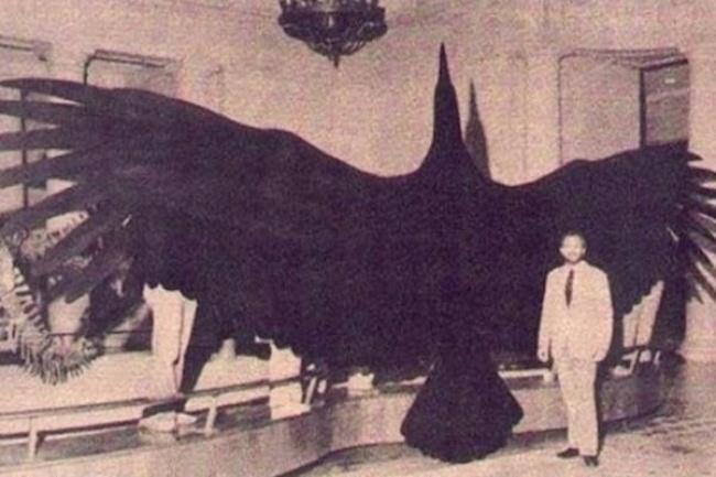 Có thể bạn không tin nhưng đây là những sinh vật khổng lồ nhất xuất hiện trên Trái đất - Ảnh 5.