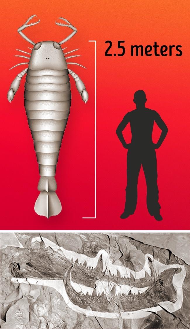 Có thể bạn không tin nhưng đây là những sinh vật khổng lồ nhất xuất hiện trên Trái đất - Ảnh 9.
