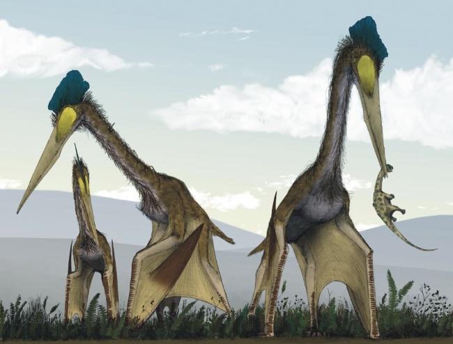 Có thể bạn không tin nhưng đây là những sinh vật khổng lồ nhất xuất hiện trên Trái đất - Ảnh 13.