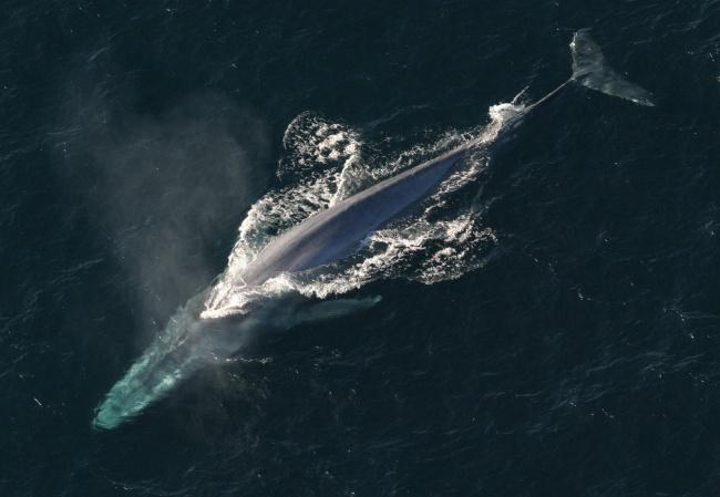 Có thể bạn không tin nhưng đây là những sinh vật khổng lồ nhất xuất hiện trên Trái đất - Ảnh 14.