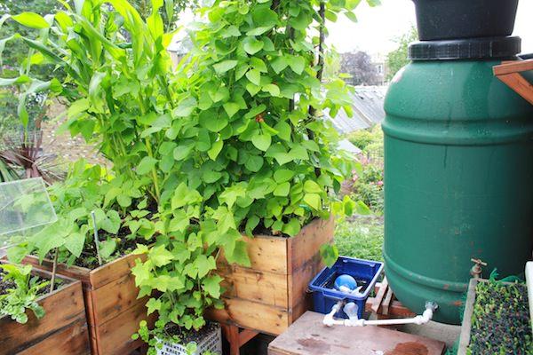 Công việc làm vườn, trồng rau sẽ vô cùng nhàn nhã nếu biết 10 cách tự tưới nước cho cây sau đây - Ảnh 3.