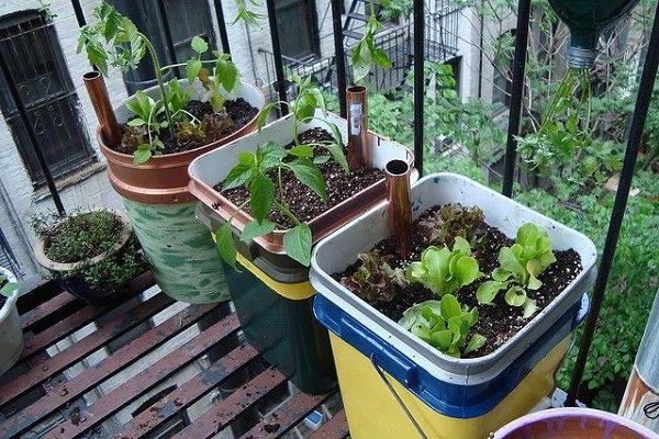 Công việc làm vườn, trồng rau sẽ vô cùng nhàn nhã nếu biết 10 cách tự tưới nước cho cây sau đây - Ảnh 9.