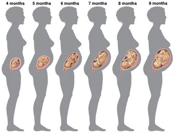 Có những điều bí ẩn trong quá trình mang thai chưa chắc mẹ bầu đã biết - Ảnh 4.