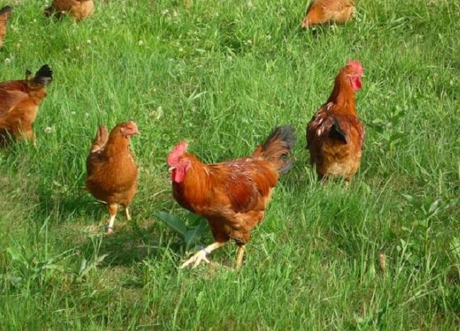 Không phải quả trứng nào cũng bổ dưỡng như nhau, bạn phải thật tinh mới nhận ra - Ảnh 6.
