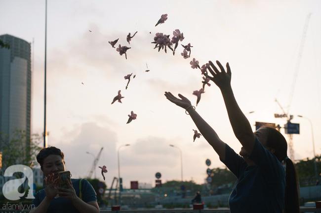 Một ngày nắng chói chang, ngắm hoa kèn hồng để thấy lòng lịm mát giữa Sài Gòn - Ảnh 14.
