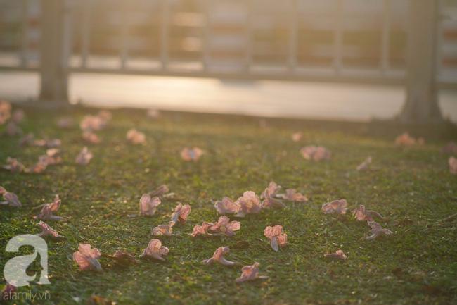 Một ngày nắng chói chang, ngắm hoa kèn hồng để thấy lòng lịm mát giữa Sài Gòn - Ảnh 15.