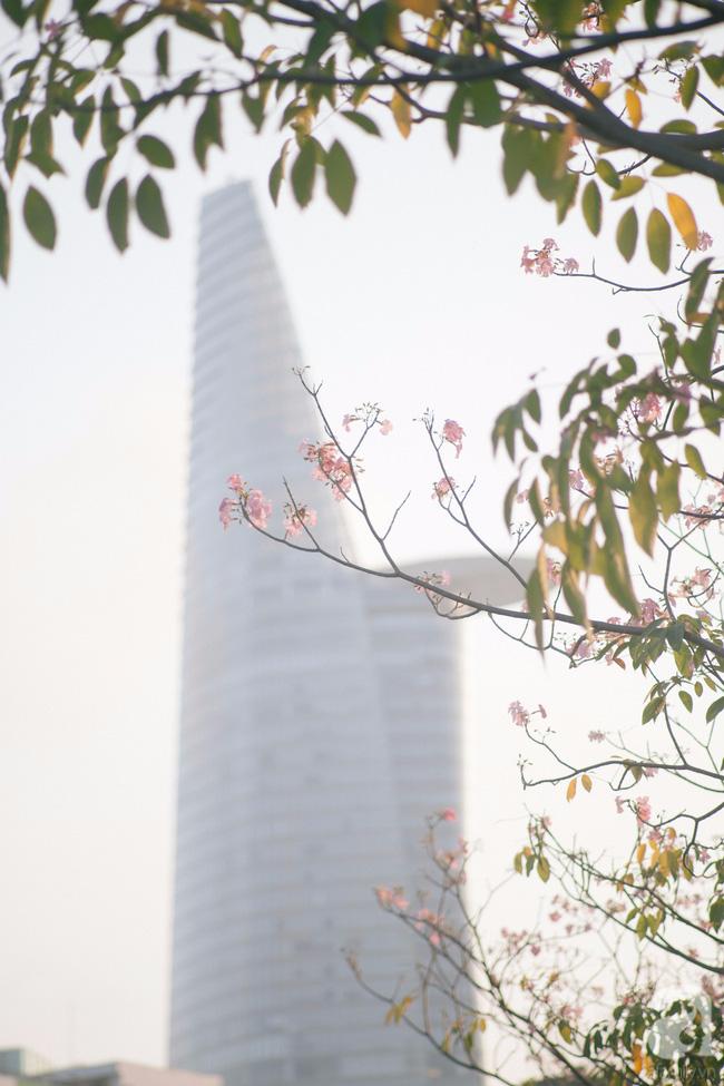 Một ngày nắng chói chang, ngắm hoa kèn hồng để thấy lòng lịm mát giữa Sài Gòn - Ảnh 6.