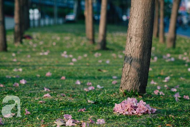 Một ngày nắng chói chang, ngắm hoa kèn hồng để thấy lòng lịm mát giữa Sài Gòn - Ảnh 11.