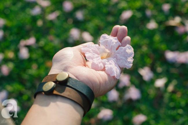 Một ngày nắng chói chang, ngắm hoa kèn hồng để thấy lòng lịm mát giữa Sài Gòn - Ảnh 3.