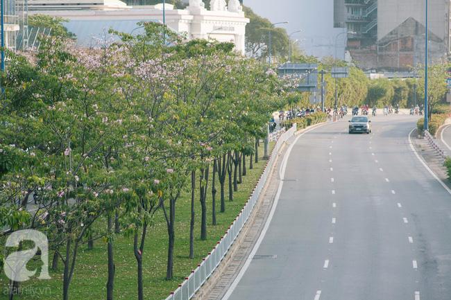 Một ngày nắng chói chang, ngắm hoa kèn hồng để thấy lòng lịm mát giữa Sài Gòn - Ảnh 9.