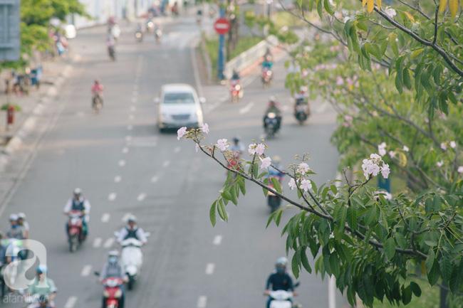 Một ngày nắng chói chang, ngắm hoa kèn hồng để thấy lòng lịm mát giữa Sài Gòn - Ảnh 5.