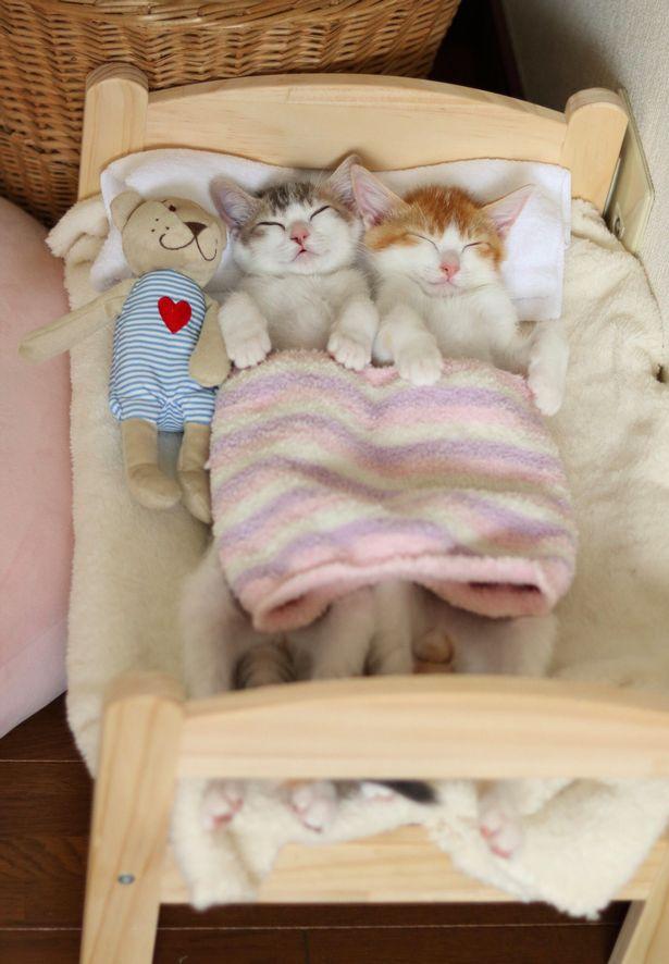 Tan chảy với đôi mèo không thể ngủ nếu không được nằm cạnh nhau - Ảnh 2.