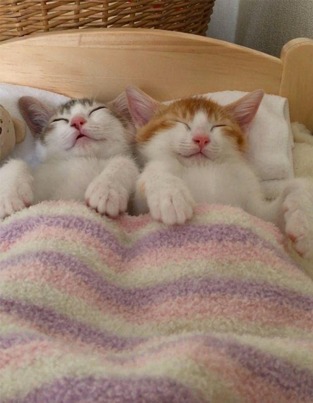 Tan chảy với đôi mèo không thể ngủ nếu không được nằm cạnh nhau - Ảnh 3.