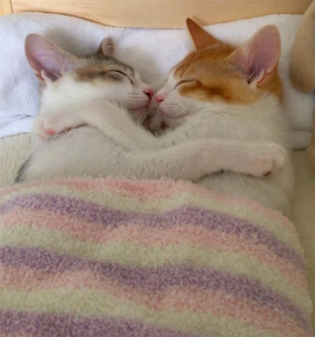 Tan chảy với đôi mèo không thể ngủ nếu không được nằm cạnh nhau - Ảnh 4.