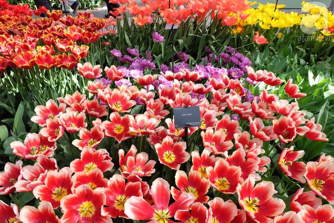 Lạc vào thiên đường hoa 7 triệu bông, một năm chỉ mở cửa một lần - Ảnh 9.