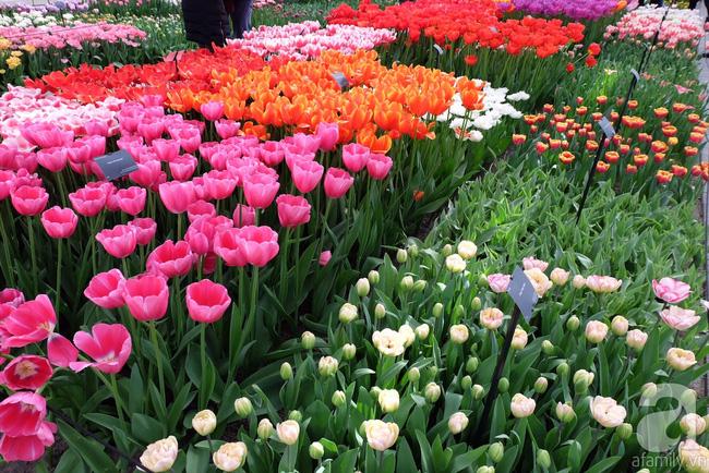 Lạc vào thiên đường hoa 7 triệu bông, một năm chỉ mở cửa một lần - Ảnh 13.