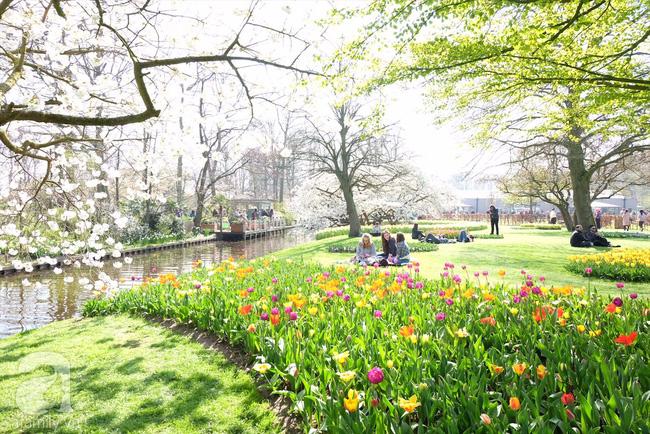 Lạc vào thiên đường hoa 7 triệu bông, một năm chỉ mở cửa một lần - Ảnh 4.