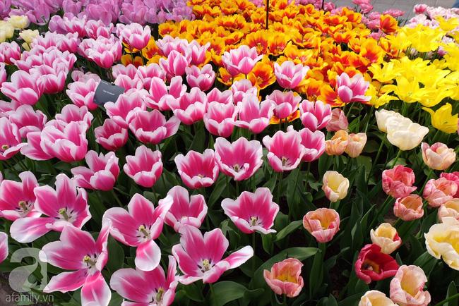 Lạc vào thiên đường hoa 7 triệu bông, một năm chỉ mở cửa một lần - Ảnh 10.