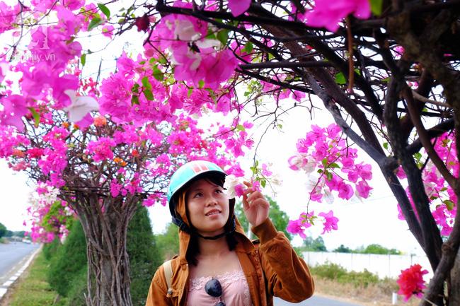 Ven Sài Gòn, có một con đường thơ mộng ngập tràn hoa giấy - Ảnh 12.