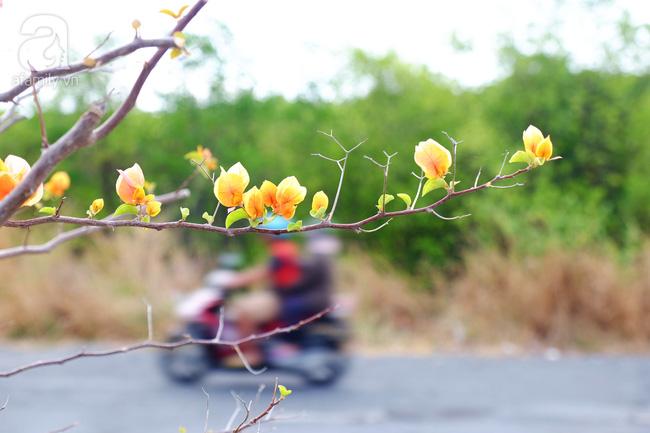 Ven Sài Gòn, có một con đường thơ mộng ngập tràn hoa giấy - Ảnh 14.