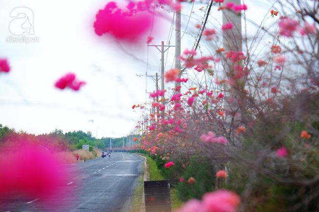 Ven Sài Gòn, có một con đường thơ mộng ngập tràn hoa giấy - Ảnh 3.