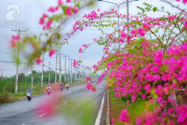 Ven Sài Gòn, có một con đường thơ mộng ngập tràn hoa giấy - Ảnh 13.