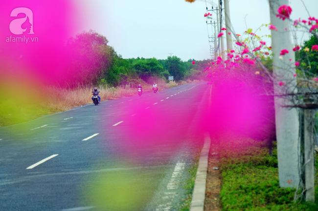 Ven Sài Gòn, có một con đường thơ mộng ngập tràn hoa giấy - Ảnh 10.