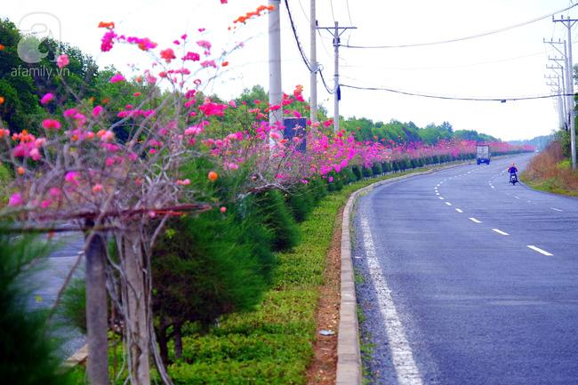 Ven Sài Gòn, có một con đường thơ mộng ngập tràn hoa giấy - Ảnh 8.