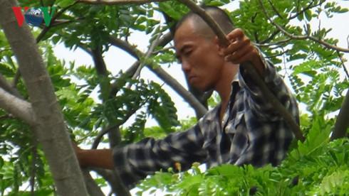Hàng chục cảnh sát cứu hộ kẻ nghi ngáo đá ngồi trên ngọn cây cao 15m - Ảnh 1.
