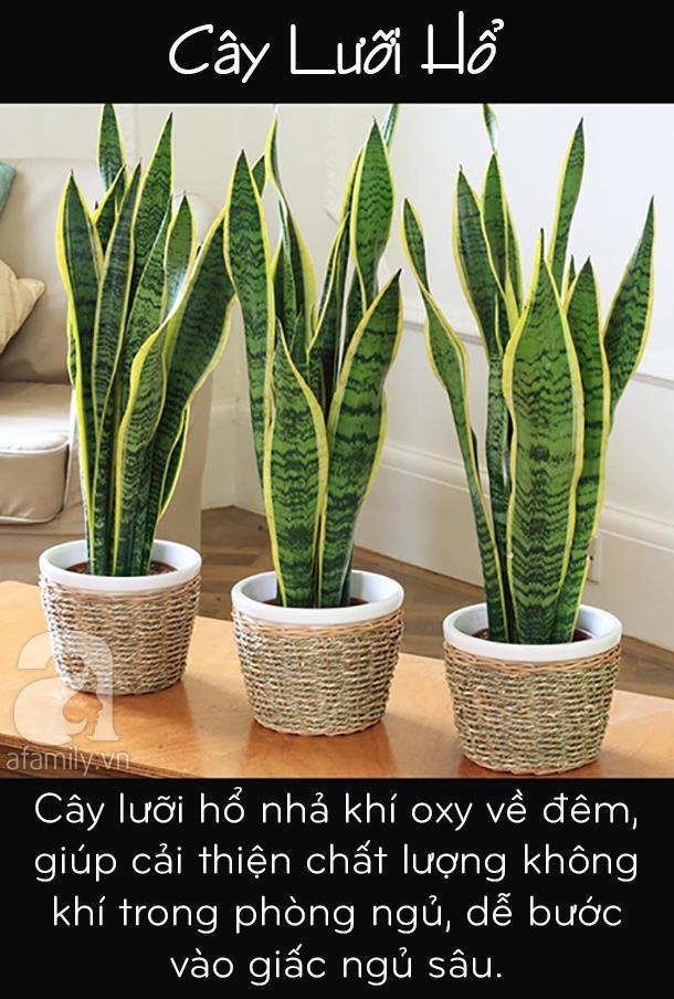Muốn lọc sạch không khí trong nhà, bạn không thể bỏ qua 5 loại cây cảnh này