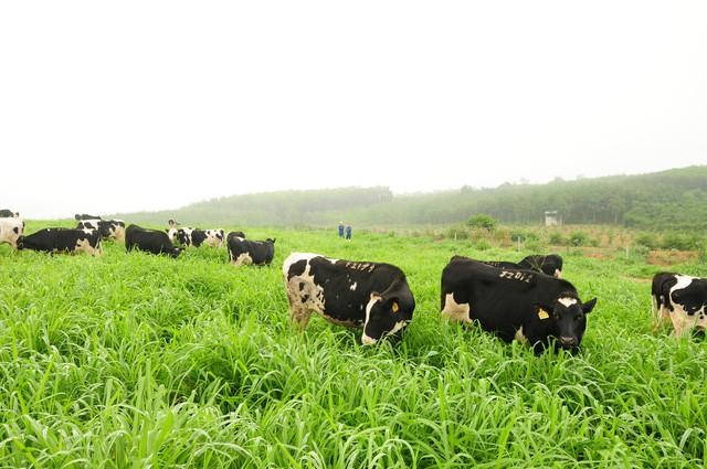Nhận diện thực phẩm organic chuẩn quốc tế tại Việt Nam - Ảnh 2.