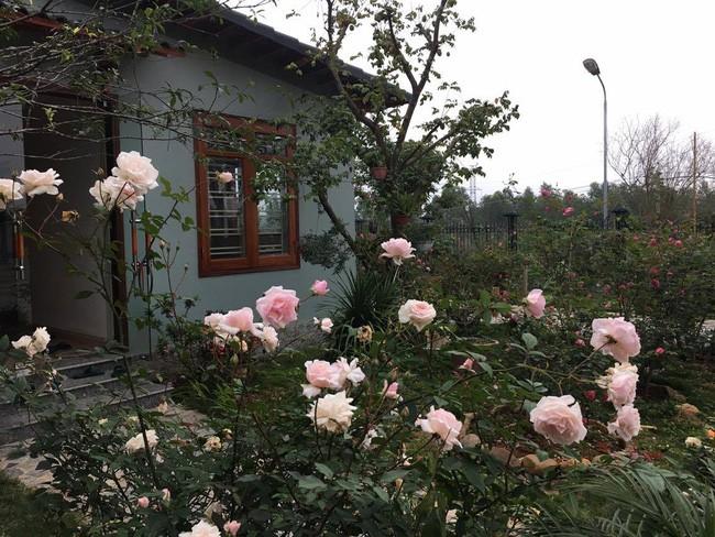 3 vườn hồng đẹp như mơ khiến độc giả tâm đắc tặng ngàn like trong năm 2017 - Ảnh 8.