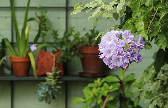 Khu vườn địa đàng của cụ bà 83 tuổi đã dành 33 năm để thỏa mãn tình yêu với cây và hoa - Ảnh 10.
