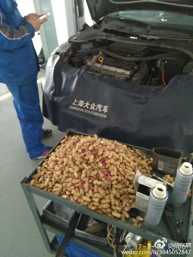 Cả năm trời cóp nhặt lạc sống trong ô tô, chú chuột đáng thương bị chủ xe lột sạch ngay trước Tết - Ảnh 5.