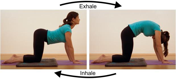 5 bài tập giãn cơ đẩy lùi đau lưng - Ảnh 3.
