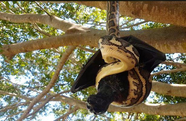 Thấy vật thể lạ bị treo trên cây, thợ săn lại gần mới giật mình nhận ra điều đáng sợ - Ảnh 3.