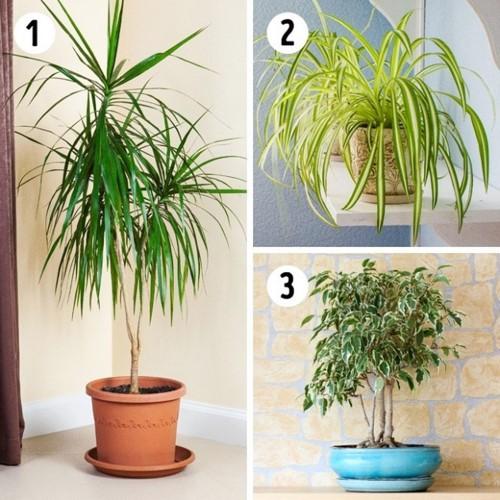Bí quyết chọn cây trồng theo phòng - Ảnh 4.