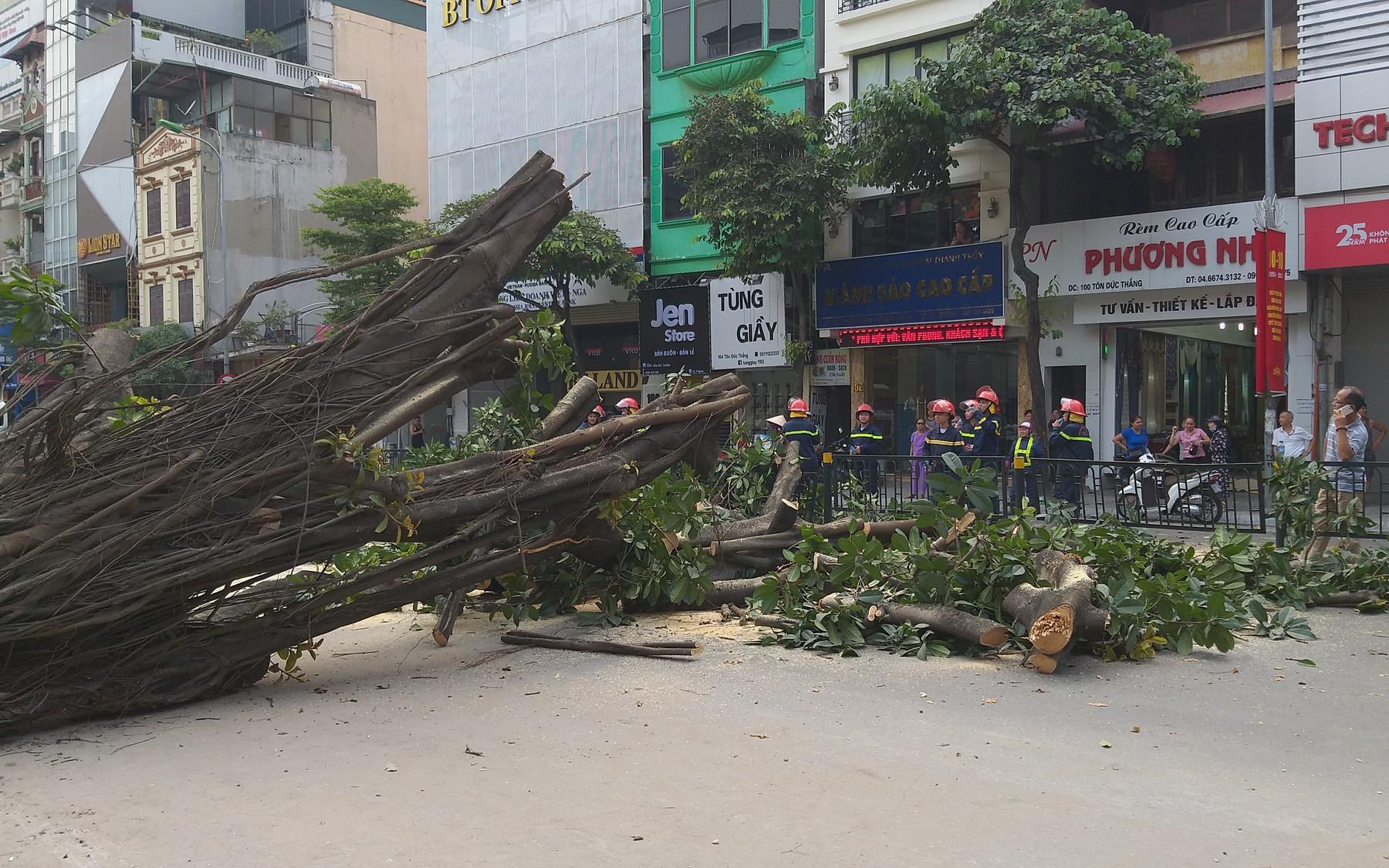Hà Nội: Cây đa cổ thụ bất ngờ đổ chắn ngang đường, tài xế thót tim khi thoát nạn