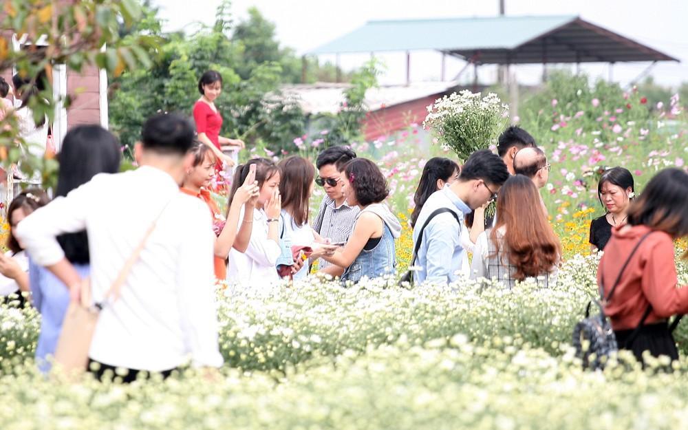 Phụ nữ, trẻ em chen nhau tạo dáng chụp ảnh kín đặc vườn cúc họa mi Nhật Tân