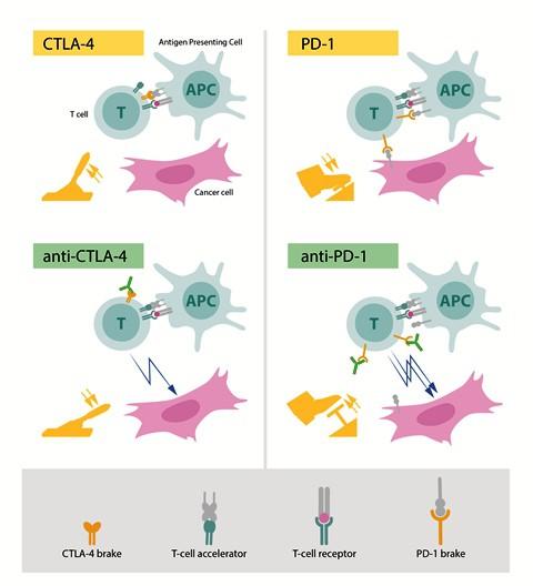 GS.TS Mai Trọng Khoa: Liệu pháp miễn dịch không phải liều thuốc tiên chữa ung thư - Ảnh 3.
