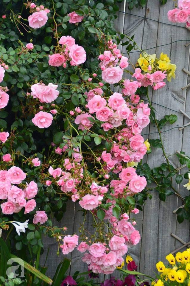 Khu vườn trăm hoa đua nở rực rỡ như chốn thiên đường của người phụ nữ Việt ở Úc - Ảnh 16.