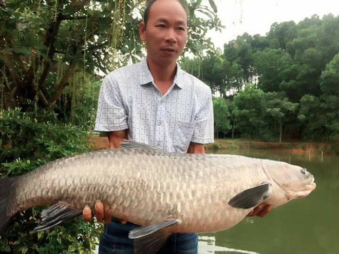 Ông bố đam mê câu cá dọn nhà ra biệt thự cạnh đầm ở, quyết tâm săn cá khủng 14kg mới về nhà ăn Tết với vợ con - Ảnh 3.
