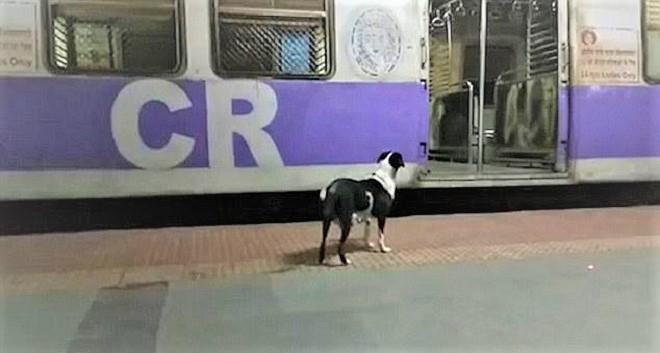 Mỗi đêm đều đợi cùng một chuyến tàu, đâu là bí mật của chú chó kì lạ này? - Ảnh 2.