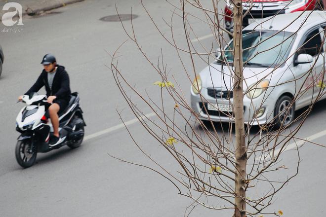 Chùm ảnh: Hàng trăm cây phong lá đỏ đã mọc lá, nảy chồi giữa Thủ đô - Ảnh 2.