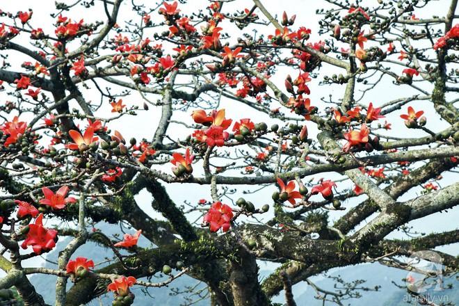 Tháng 3 về, hoa gạo thắp sáng núi rừng chùa Hương - Ảnh 6.