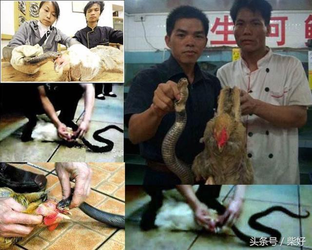 Chuột bao tử ăn sống, gà khô để nguyên lông là 2 trong 5 món ăn kỳ quái nhất Trung Quốc, người phàm ăn nhất cũng ái ngại - Ảnh 11.