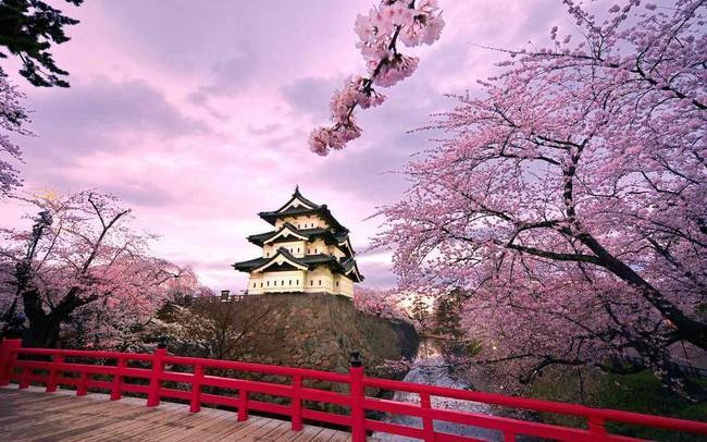 Ngẩn ngơ trước vẻ đẹp của hoa anh đào Nhật Bản trong mùa Hanami - Ảnh 2.
