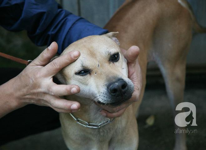 Năm Tuất và chuyện con chó gắn bó với đời sống của người Việt chúng ta như thế nào? - Ảnh 5.